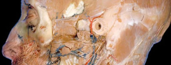 Curiozitati Bizare Medicina: Disectia corpului uman