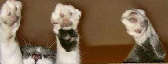 30 de lucruri bizare pe care nu le stiai despre pisici