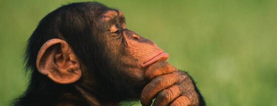 Stiati Ca: 10 curiozitati despre animale