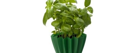 Plantele vorbesc, spun specialiştii. Dar oare ce îşi spun?