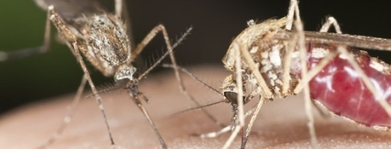 Tot ce nu ştiai despre ţânţari: 6 întrebări la care răspund oamenii de ştiinţă