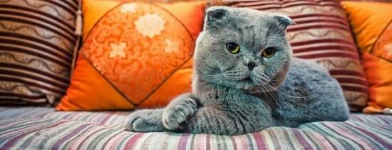 Veşti bune pentru proprietarii de pisici: felinele nu ne ignoră
