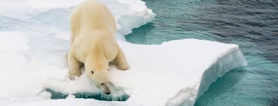 Experţii au dat ALARMA: temperatura de la Polul Nord este cu 20 de grade Celsius mai crescută decât în mod normal