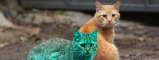 De ce animalele nu au blana verde? VIDEO