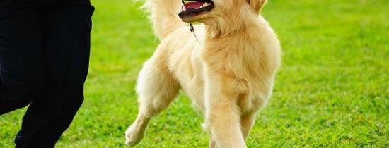 Cel mai bun prieten al câinelui este…omul!