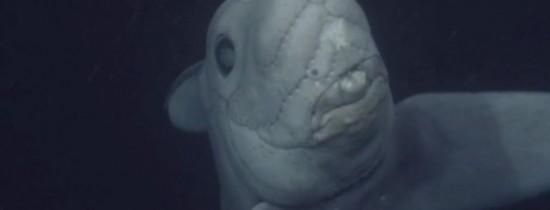 O creatură bizară a fost filmată pentru prima dată – FOTO, VIDEO