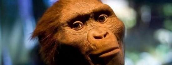 Cum a  murit Lucy, cel mai celebru strămoş? Cercetătorii au emis o nouă teorie