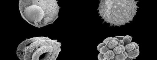 O nouă descoperire paleontologică umple un gol important în istoria vieţii şi oferă indicii cruciale cu privire la apariţia primelor organisme pluricelulare