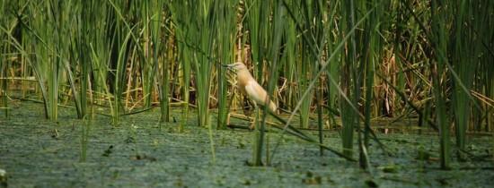 Un nou proiect de lege pune în pericol comunităţile şi speciile sălbatice din lungul Dunării şi Deltă