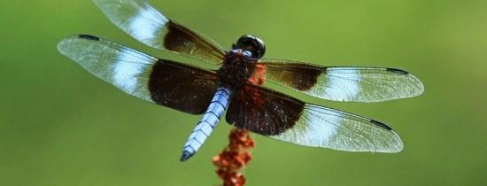 Populaţia de insecte zburătoare a scăzut cu 75% în ultimii 27 de ani. Fenomenul are urmări grave