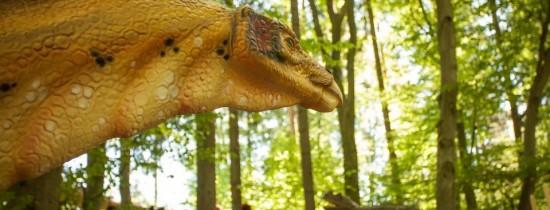 Expoziţie inedită de fosile descoperite pe teritoriul României în cadrul Dino Parcului Răşnov