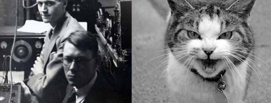 Telefonul-pisică: În 1929 doi cercetători americani au creat un telefon funcţional dintr-o pisică