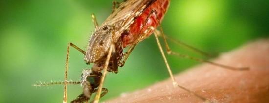 Un compus comun din pasta de dinţi ar putea ajuta la tratarea malariei