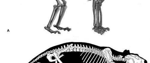 Scheletul unui leu cu marsupiu, ce a trăit în urmă cu 50.000 de ani, a fost descoperit în Australia