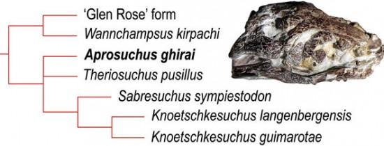 O nouă specie de crocodil preistoric a fost descoperită în Bazinul Haţeg