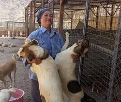 """O româncă gestionează primul adăpost pentru câini abandonaţi din Iordania: """"Nu e uşor"""""""