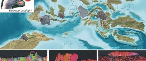 Una dintre enigmele dinozaurilor, elucidată de o echipă de paleontologi din care a făcut parte şi un român