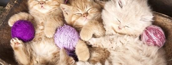De ce torc pisicile?