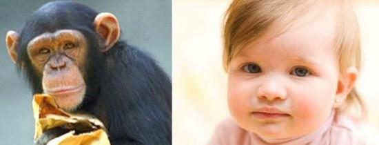 Ce învăţăm de la maimuţe şi de la copiii mici în privinţa limbajului?