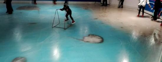 """O """"premieră mondială"""" horror în Japonia: patinoarul cu 5000 de vieţuitoare marine congelate în podea"""