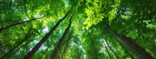 De ce frunzele plantelor au mărimi diferite?