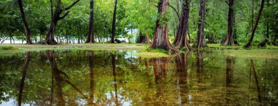 Un studiu ajunge la o concluzie alarmantă: pădurile tropicale emit mai mult carbon decât oxigen