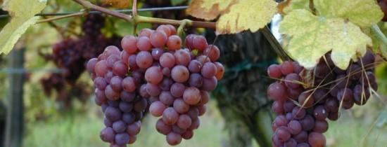 Turismul viticol din România: De ce românii pot renunţa la munte sau la mare pentru o cramă