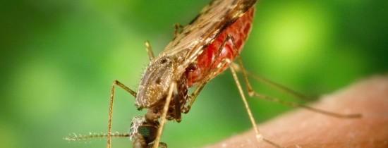 Veste excelentă în lumea medicală: cercetătorii au identificat mecanismul de apărare al parazitului malariei
