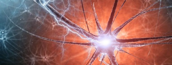 Cercetătorii au descoperit un nou tip de neuroni care sunt implicaţi în învăţarea senzorială