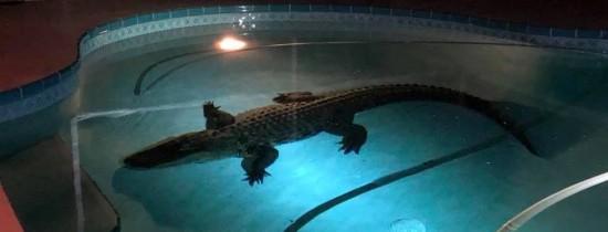 VIDEO. Un om din Florida s-a trezit cu un intrus mai puţin obişnuit în piscina casei sale