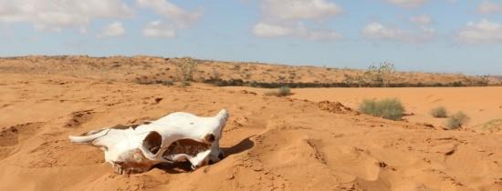 Sahara se EXTINDE: Cel mai mare deşert de pe glob a crescut cu 10% în ultimul secol din cauza schimbărilor climatice
