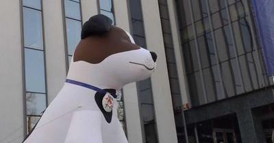 Câinii fără stăpân dintr-un oraş din România vor fi transformaţi în câini de terapie