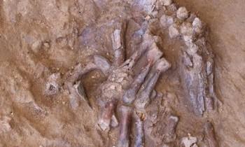Descoperirea unui craniu strivit al unui Neanderthal ar putea schimba perspectiva asupra evoluţiei omului. FOTO